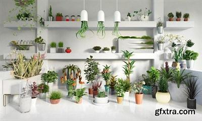 Evermotion - Archmodels vol.141 - Indoor Plants (MAX/V-Ray)