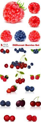 Vectors - Different Berries Set