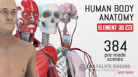 Human Body Anatomy - Project for After Effects (Videohive)