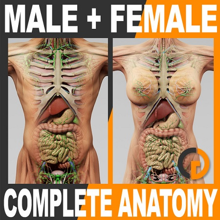 TurboSquid: Human Male and Female Complete Anatomy